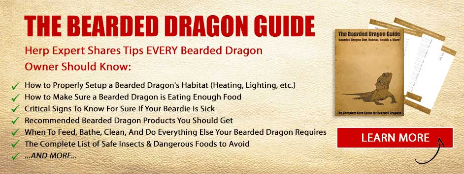 Poop 101: A Definitive Guide To Bearded Dragon Poop
